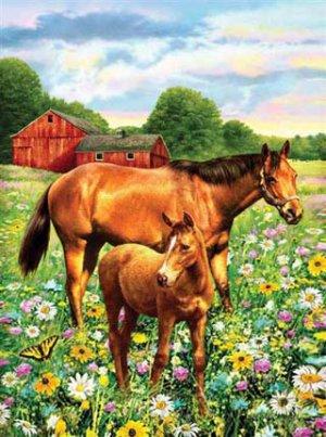 PBN 81 HORSE IN FIELD JNR SML